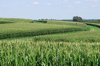 Agri-Business Consultants
